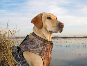 This photo of Schatzie was taken on a slow day when the ducks weren't flying...and ending up being featured in a magazine.